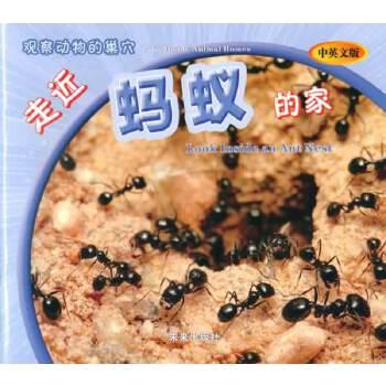 观察动物的巢穴:走近蚂蚁的家